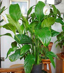Plantas que limpian el aire image